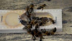 The bee-queen. stock video