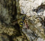 Bee on the rocks Stock Photos