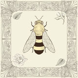 Bee and rose drawing. Hand drawing bee rose buds and leaves with decorative frame vintage engraving style Royalty Free Stock Photos