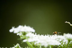 A bee's journey. An abstract angle creates a visual journey across this image, ready to take fight with the bee into the hazy distance Stock Photos