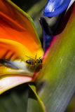 A Bee's Life Stock Photography
