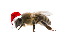 Bee with santa cap. Isolated on a white background Royalty Free Stock Photos