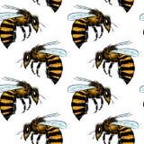 Bee seamless pattern Royalty Free Stock Image