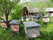 Bee season stock images