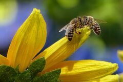 Bee Sipping Nectar on Flower during Daytime Stock Photos