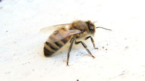 Bee sits at beehive stock video