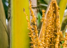 A bee sits on a palm branch stock photo