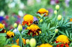 Bee sitting on flower Stock Photography