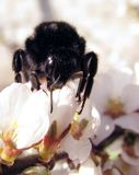 Bee sitting on a flower stock photos