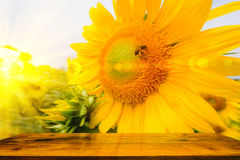 The bee sitting on sunflower with with Wood table. Royalty Free Stock Image