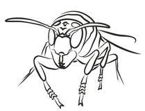 Bee. Stock Photos