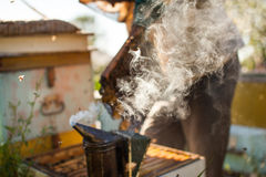 Bee smoker smoking in apiary copyspace seasonal honey bees beekeeping farming organic production producing concept. royalty free stock photo