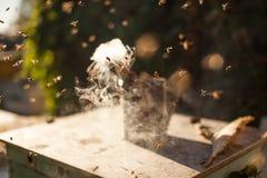 Bee Smoker Smoking In Apiary Copyspace Seasonal Honey Bees Beekeeping Farming Organic Production Producing Concept. Royalty Free Stock Photo