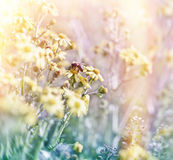 Bee on spring flowers Royalty Free Stock Images