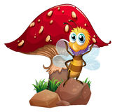 A bee standing at the rock with a mushroom at the back Stock Photos