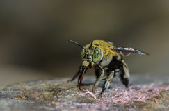 Bee on stone. Royalty Free Stock Photo