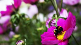 A bee suckling from a flower stock photo