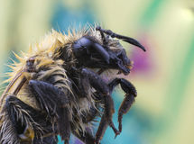 Bee super macro Royalty Free Stock Photography