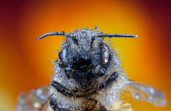 Bee, swap, honey, background flower insects wasp. Bee, swap, honey, background flower wild royalty free stock images