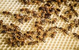 Bee swarm Stock Image