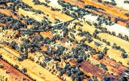 Bee swarm Stock Photo