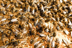 Bee swarm Stock Photos