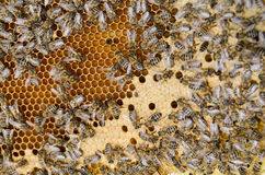 Bee swarm working Royalty Free Stock Images