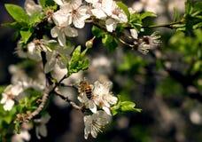 Bee and tree Stock Photo