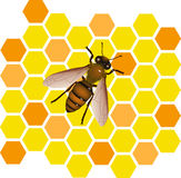 Bee vector Stock Photography