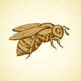 Bee. Vector drawing Royalty Free Stock Image