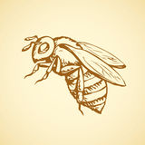 Bee. Vector drawing Stock Photos