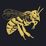 Bee Vector Engraving Illustration Honey Bee