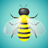 Bee Vector Illustration Stock Images