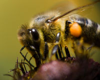 Bee vision Royalty Free Stock Photo