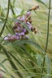 Bee on wildflower Royalty Free Stock Photos