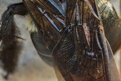 Bee Wing Close Up Stock Photos