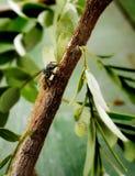 Bee on wood Stock Image