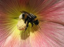 Bee at work stock photos