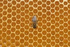 Bee work. On full honeycomb Stock Image