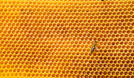 Bee work on honeycomb with sweet honey. Bees work on honeycomb. Honey cells pattern Stock Photos