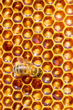 Bee work on honeycomb with sweet honey. Bees work on honeycomb. Honey cells pattern Royalty Free Stock Photo