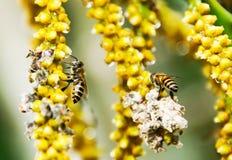 Bee Stock Photos