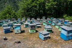 Bee yard Royalty Free Stock Photos