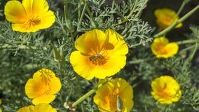 Bee on yellow flower Stock Photography