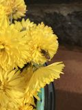 Bee on Yellow Flower. Yellow flower with honey bee Royalty Free Stock Photography