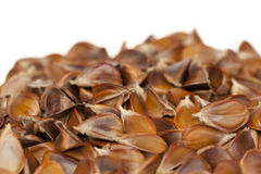 Beech Royalty Free Stock Images