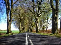 Beech alley near Naclaw Stock Image