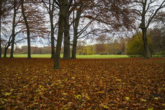 Beech in Autumn, low Point of View. Englischer Garten Stock Images