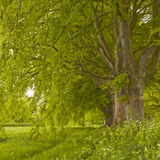 Beech Avenue Stock Images