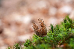 Beech crop with green moss Royalty Free Stock Photography